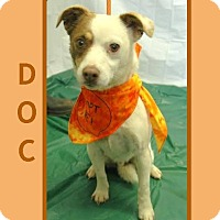Adopt A Pet :: DOC - Dallas, NC
