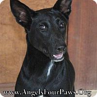 Adopt A Pet :: DIXXIE - Humble, TX
