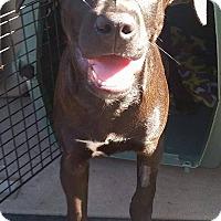 Adopt A Pet :: Digger - Gainesville, FL
