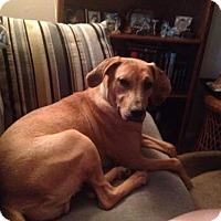 Adopt A Pet :: Lola - Liberty, MO