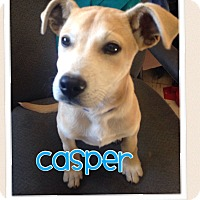 Adopt A Pet :: Casper*ADOPTED!* - Chicago, IL