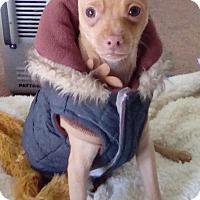 Adopt A Pet :: Spencer - San Diego, CA