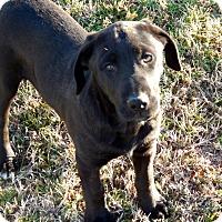Adopt A Pet :: Anna - Westport, CT