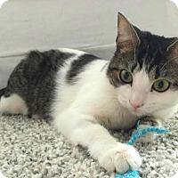 Adopt A Pet :: Belvedere - Toronto, ON