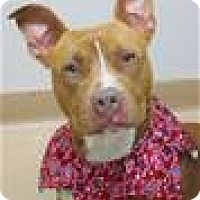 Adopt A Pet :: MESA (ECAS Kennel A7) - Pleasanton, CA