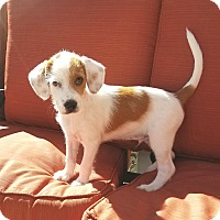 Adopt A Pet :: Marco - Linden, NJ