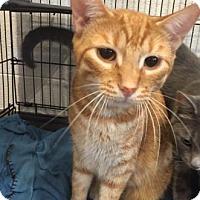 Adopt A Pet :: Buddy - Paducah, KY