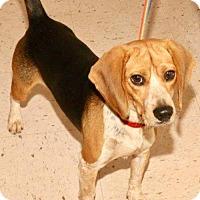 Adopt A Pet :: Roger - Winder, GA