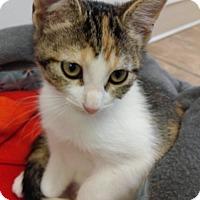 Adopt A Pet :: Harmony - Cloquet, MN