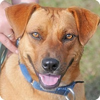 Terrier (Unknown Type, Medium) Mix Dog for adoption in Fernandina Beach, Florida - SPARROW