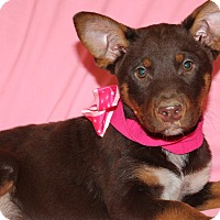 Adopt A Pet :: Sabrina - Southington, CT