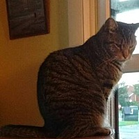 Adopt A Pet :: TwinCP - Carlisle, PA