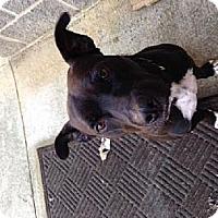 Adopt A Pet :: Isaac - Odenville, AL