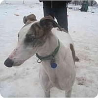 Adopt A Pet :: Poppy (Paperbagprincess) - Chagrin Falls, OH