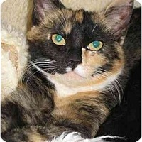 Adopt A Pet :: SHANNA (KL) - Little Falls, NJ