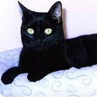 Adopt A Pet :: Liberty - Medway, MA