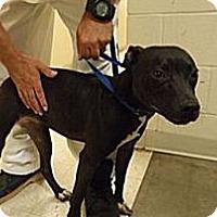 Adopt A Pet :: Ella - Bloomsburg, PA
