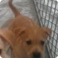 Adopt A Pet :: Caliope - Phoenix, AZ