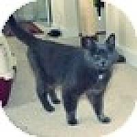 Adopt A Pet :: Elliotta (Edna) - Vancouver, BC