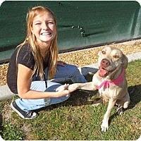 Adopt A Pet :: Georgia - Orlando, FL