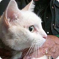 Adopt A Pet :: POWDER - Mahopac, NY