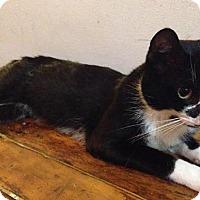 Adopt A Pet :: Paavo - Brooklyn, NY