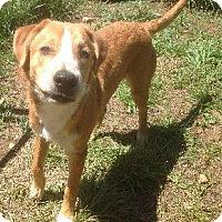 Adopt A Pet :: Hutch - Albany, NY