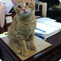 Adopt A Pet :: Butterscotch - Trevose, PA