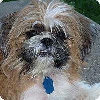 Adopt A Pet :: Max - Omaha, NE