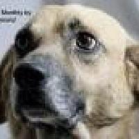 Labrador Retriever Mix Dog for adoption in Jackson, Mississippi - Diogee (D O G)