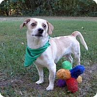 Adopt A Pet :: Marbles - Mocksville, NC