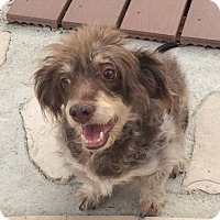 Adopt A Pet :: Brownie (JE) - Santa Ana, CA