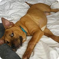 Adopt A Pet :: Hudson - New Oxford, PA