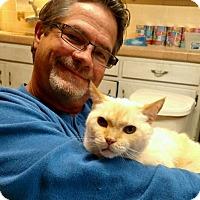 Adopt A Pet :: Buttercup - Riverside, CA