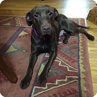 Adopt A Pet :: Emma - Albemarle, NC