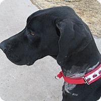 Adopt A Pet :: Olivia - El Paso, TX