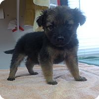 Adopt A Pet :: Lola - Manning, SC