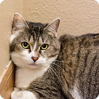 Adopt A Pet :: Rhonda - Fountain Hills, AZ
