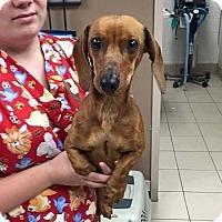 Adopt A Pet :: Frank - Bernardston, MA