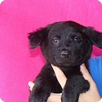 Adopt A Pet :: Panama - Oviedo, FL
