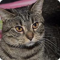 Adopt A Pet :: Reese - Medina, OH