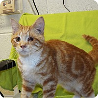 Adopt A Pet :: Jack Sparrow - Shelby, MI