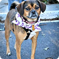 Adopt A Pet :: Elsa - Kimberton, PA