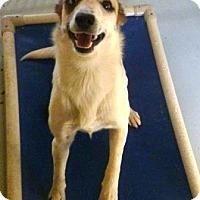 Adopt A Pet :: Tizzy - Avon, NY