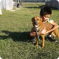 Adopt A Pet :: Cheddar - Mantua, NJ