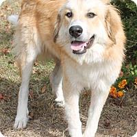 Adopt A Pet :: Ayla 25816 - Prattville, AL