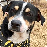 Adopt A Pet :: Ricky - Pulaski, TN