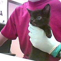 Adopt A Pet :: A277346 - Conroe, TX