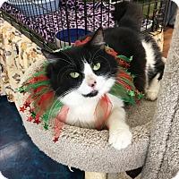 Adopt A Pet :: Twiggy - Naples, FL