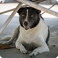 Adopt A Pet :: Cypress - Long Beach, NY